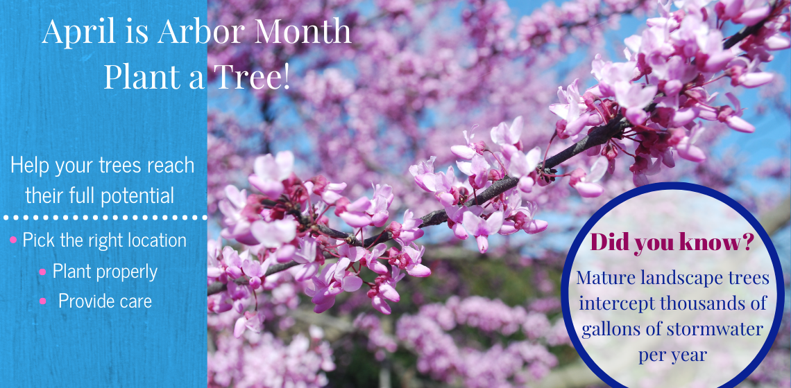 Image shows redbud in bloom with reminder to plant trees properly to help them reach their full potential